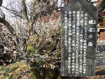 姫若の梅の碑